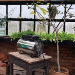 Ruukkukasvien talvettaminen