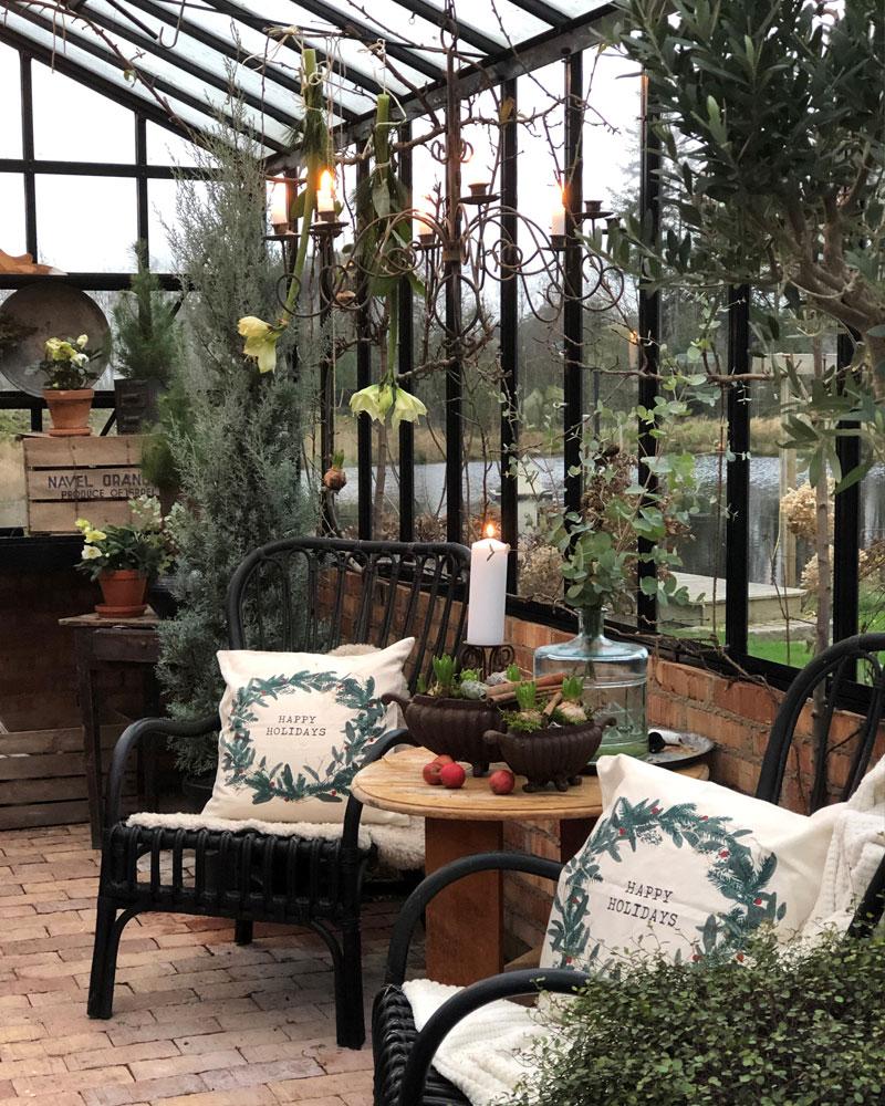Amaryllis jouluisessa kasvihuoneessa