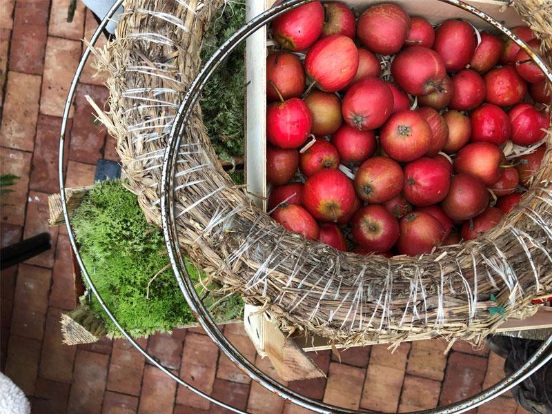 Joulu-omenoita