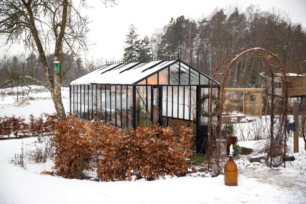 Musta muuri kasvihuone talvella