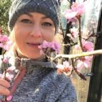 Persikkapuusta saat hyötyä ja iloa!