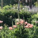 3 laiskaa puutarhavinkkiä.