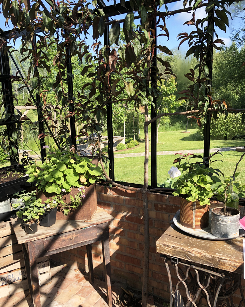 Varjostusta kasvihuoneeseen ‒ istuta puu!