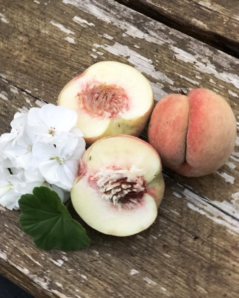 Persikkapuut kasvihuoneessa