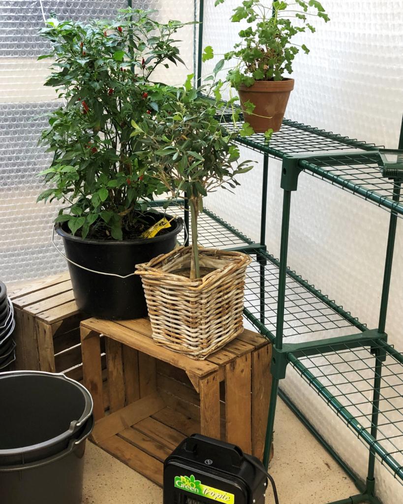 Miten kasvit talvetetaan