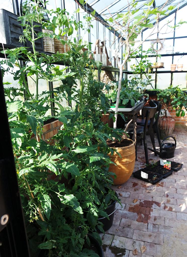 Varkaita kasvihuoneessa