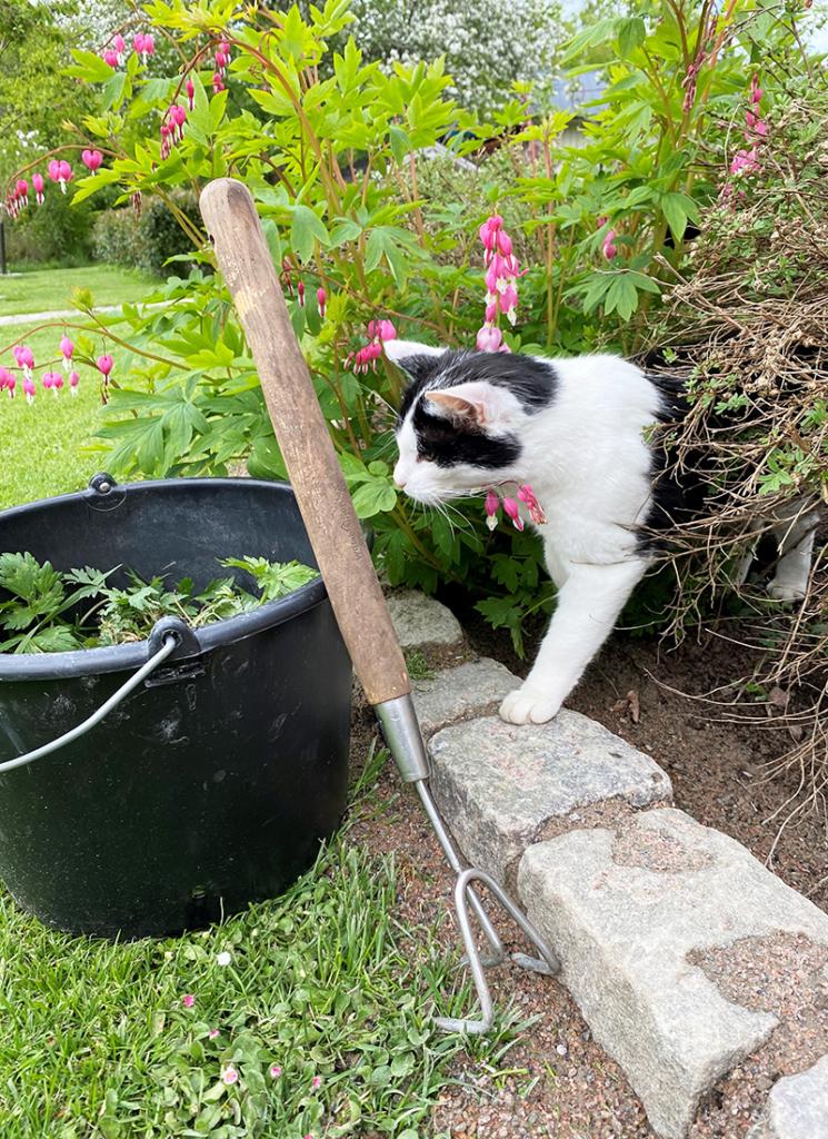 Pakolliset puutarhatyökaluni